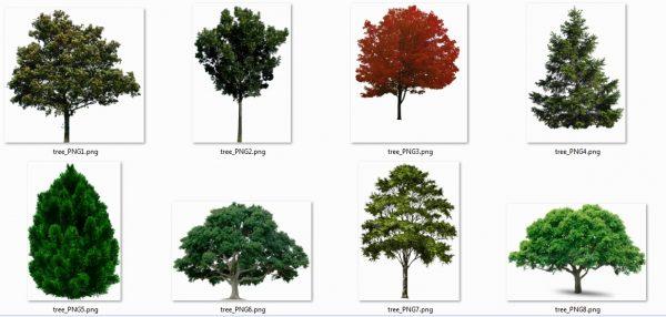 مجموعه اول درخت با کیفیت عالی