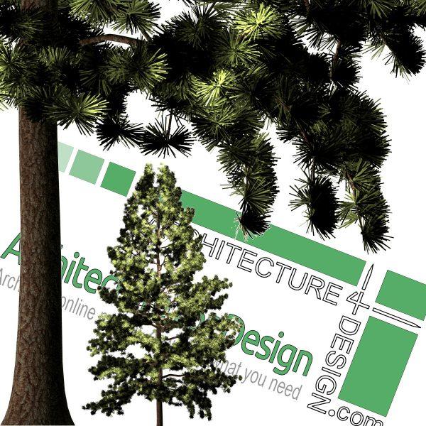درخت PNG رزولوشن بالا