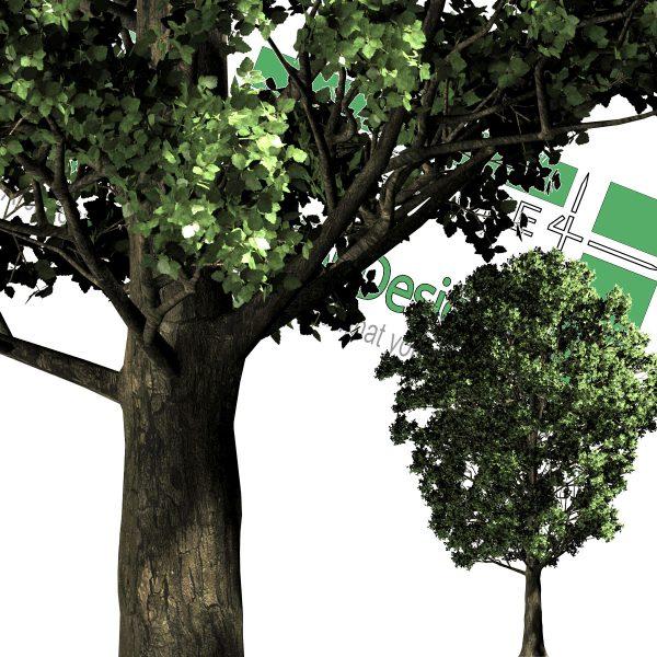 درخت PNG برای دانلود