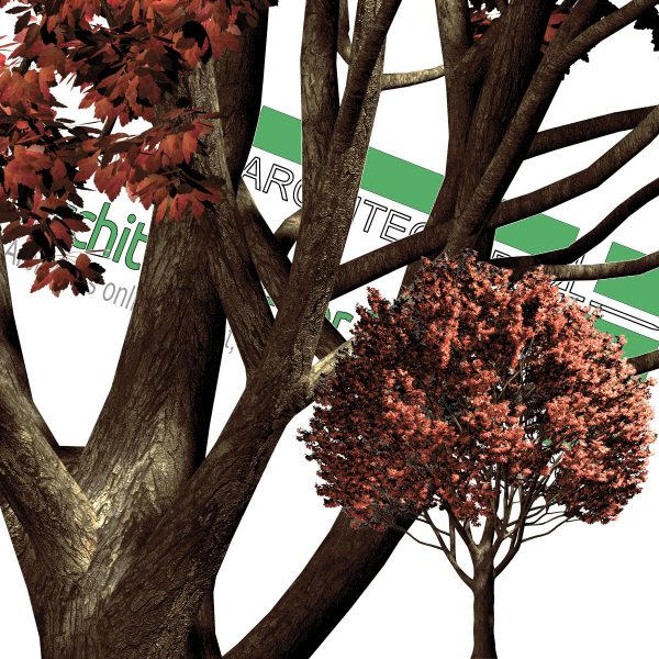 درخت PNG پاییزی