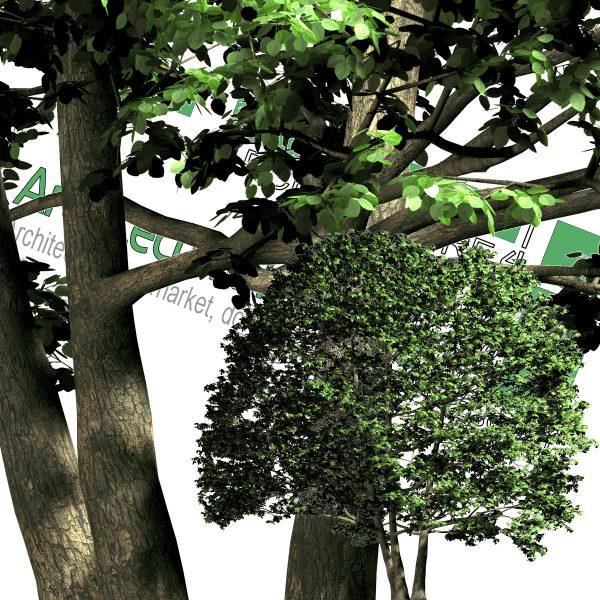 درخت PNG از رو به رو