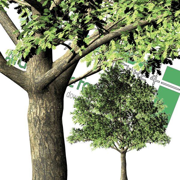 درخت دانلودی PNG
