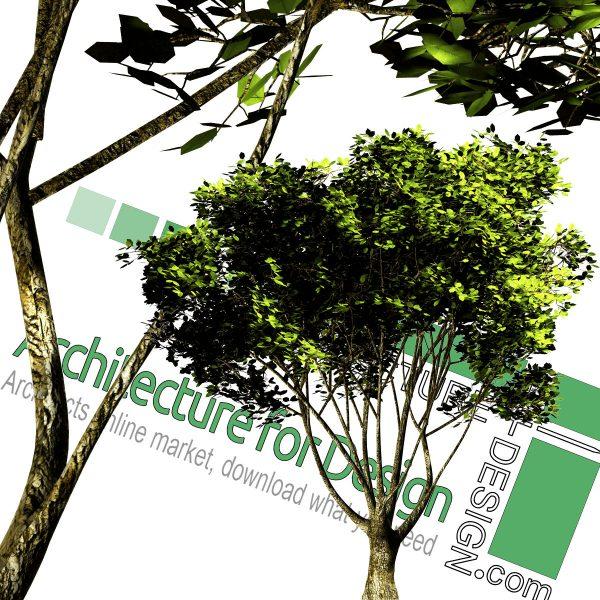 درخت PNG با رزولوشن بالا