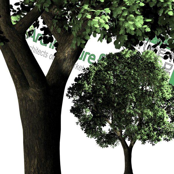 تصاویر درخت PNG