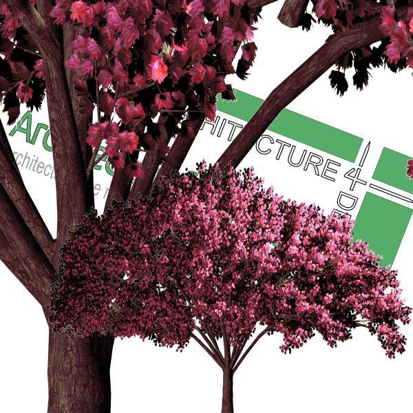 درخت پاییزی PNG