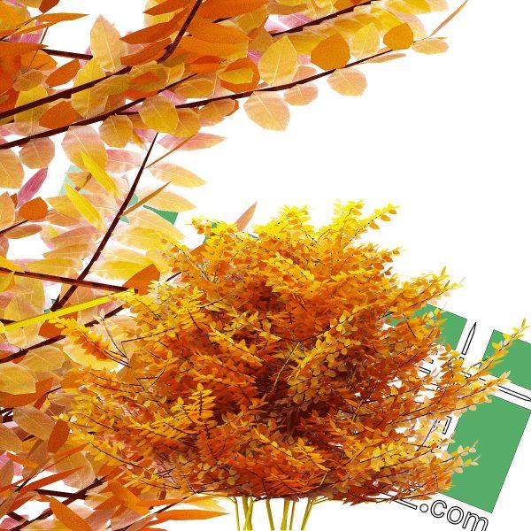 درخت پاییزی png با رزولوشن بالا