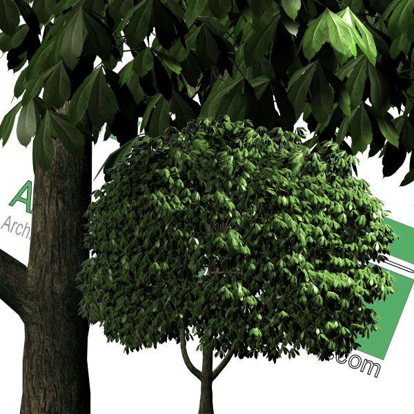 درخت با پس زمینه شفاف