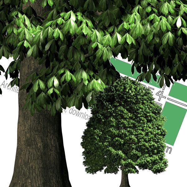 درخت برای پست پروداکشن