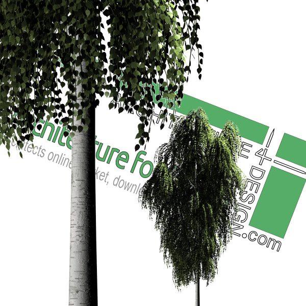 نمای درخت PNG