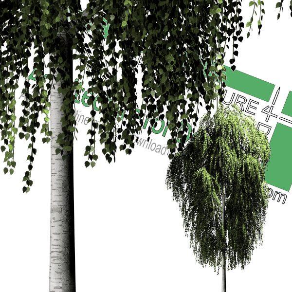 دانلود فایل درخت