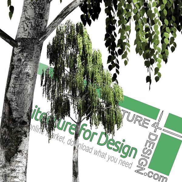 درخت PNG با کیفیت بالا