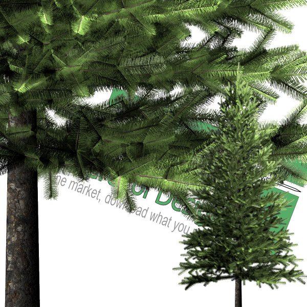 درخت کاج PNG با رزولوشن بالا