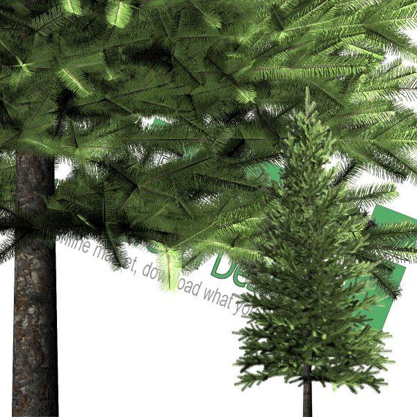 درخت PNG کاج
