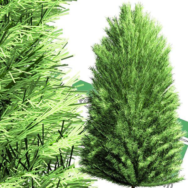 درخت سرو PNG