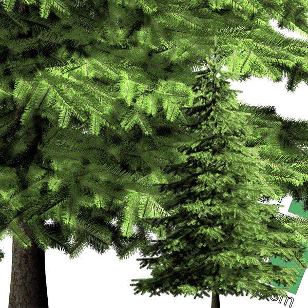تصویر درخت کاج PNG
