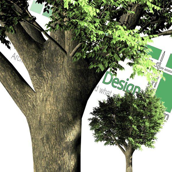 دانلود رایگان درخت PNG