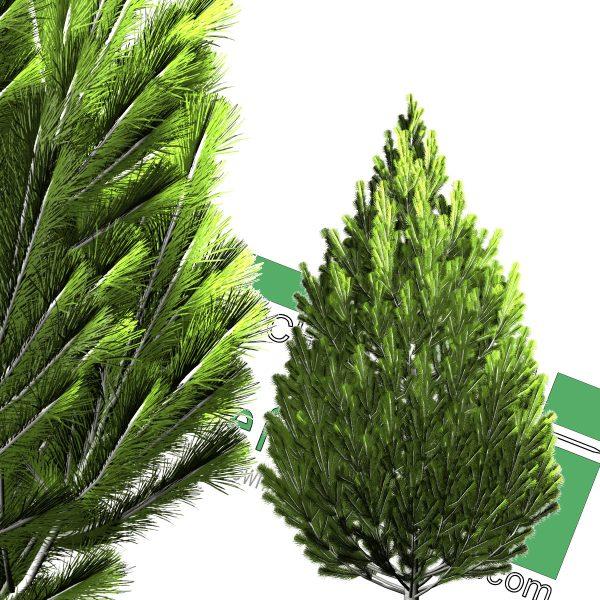 درخت PNG سرو