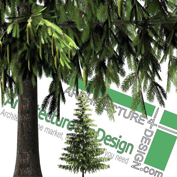 درخت کاج با فرمت PNG