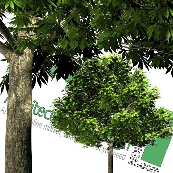 درخت با فرمت PNG