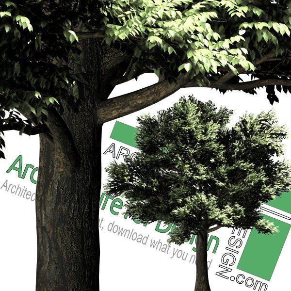 درخت PNG های رزولوشن