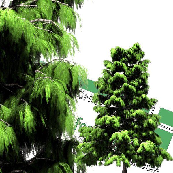 درخت کاج PNG
