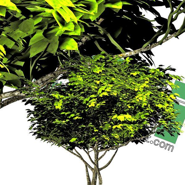 درخت مرکبات PNG
