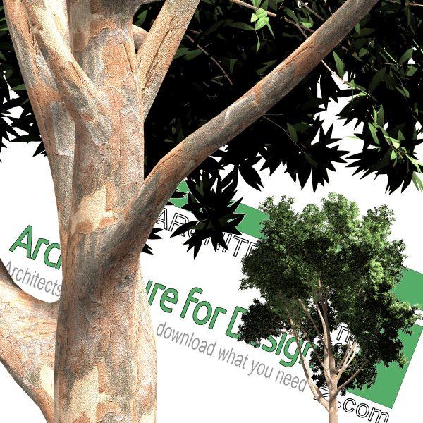 تنه درخت PNG