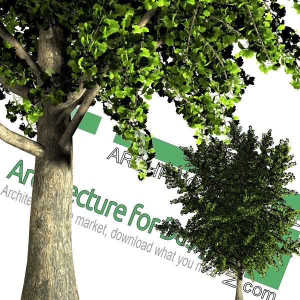درخت PNG highresolution