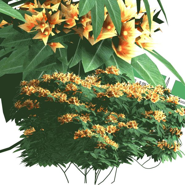 بوته گل PNG با رزولوشن بالا