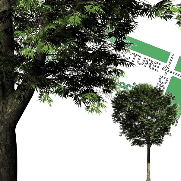 درخت PNG